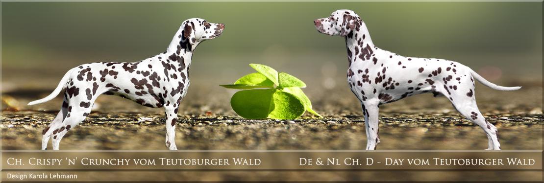 JJ - Wurf vom Teutoburger Wald - Crispy 'n' Crunchy vom Teutoburger Wald und D-Day vom Teutoburger Wald