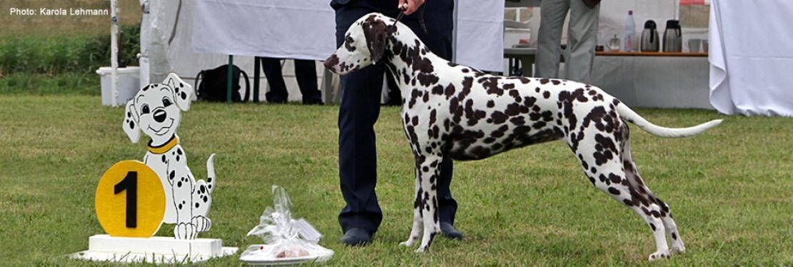 Ausstellungen | Doghandling