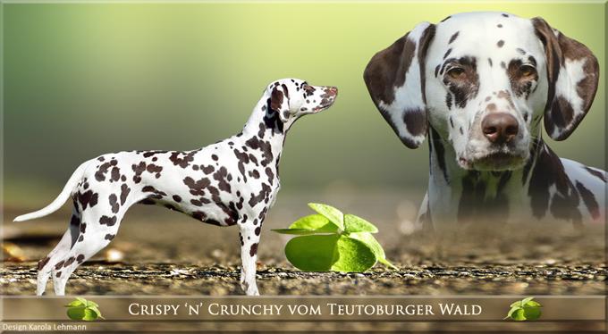 Crispy 'n' Crunchy vom Teutoburger Wald