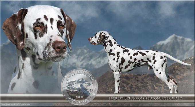 Everest Echo vom Teutoburger Wald (1,5 Jahre)
