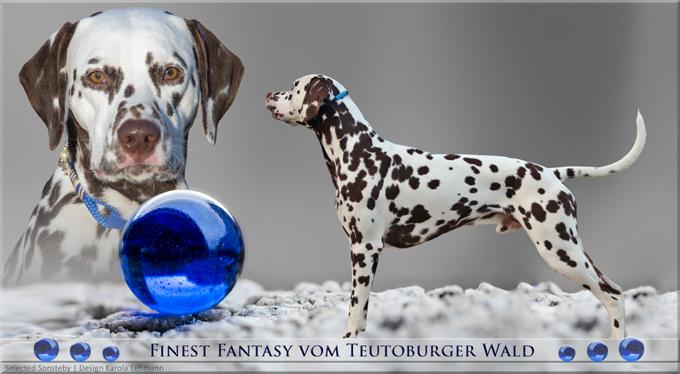 Finest Fantasy vom Teutoburger Wald