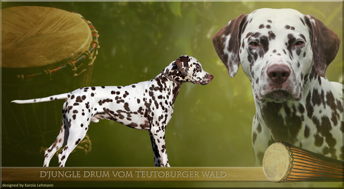 D'jungle Drum vom Teutoburger Wald