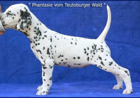 Phantasie vom Teutoburger Wald (Familie Domberg in 48329 Harixbeck)