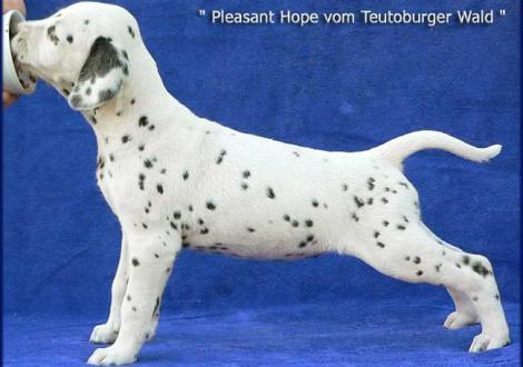 Pleasant Hope vom Teutoburger Wald (Besitzer: Susanne Weigel-Höhl in 37083 Göttingen)