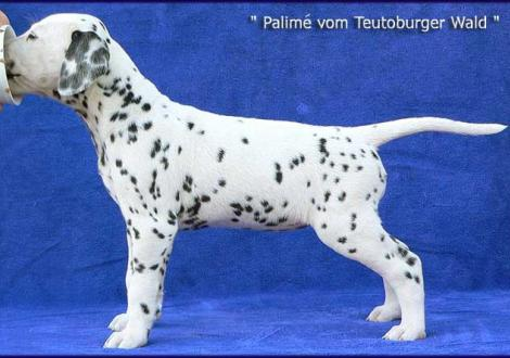 Palimé vom Teutoburger Wald (Besitzer: Iris Nickel-Schmidtke in 24960 Glücksburg)