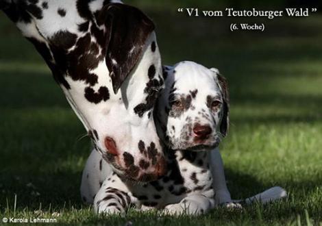 Bilder von unserem V-Wurf vom Teutoburger Wald
