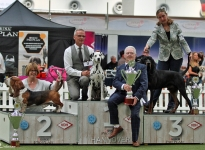 VDH Annual Trophy Show Hannover (DE) - BEST IN GROUP - Ch. Obonya's Pride Anna-Ariella