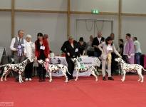 CAC Gemeinschafts Rassehundeausstellung Magdeburg (DE)