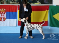 CACIB Internationale Ausstellung San Marino (SMR)