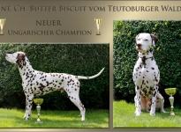 Butter Biscuit vom Teutoburger Wald – Neuer Ungarischer Champion