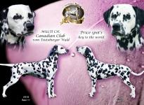 Deckung Canadian Club vom Teutoburger Wald