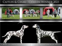 BEST OF BREED | VDH GERMAN WINNER 2021 – Das Geschwister-Duo Canadian Club & Crispy 'n' Crunchy vom Teutoburger Wald