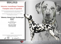 Dakota - Neuer Schweizer Champion - Gleamy Garnet vom Teutoburger Wald