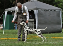 CAC Siegerschau Märkische Schweiz Strausberg (DE) BESTE HÜNDIN (BOS) – Champion Obonya's Pride Anna-Ariella