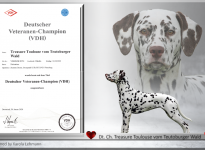 Amena - Neue Deutsche Veteranen Championesse - Treasure Toulouse vom Teutoburger Wald