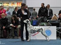 WORLD DOG SHOW LEIPZIG (DE)