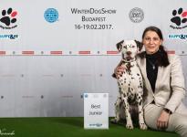 3 x CACIB Winter Dog Show Budapest & Clubshow (HU)