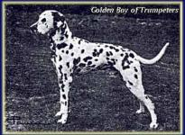 Golden Boy of Trumpeters
