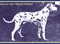 Garcon vom Margaretenhof