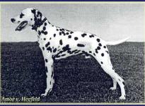 Amor vom Hegfeld
