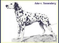 Asko vom Tannenberg