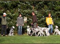 ... Rudelführer Seminar: Die Hunde sind ruhig und gehorsam