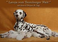 Latoya vom Teutoburger Wald