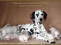 Nabuka vom Teutoburger Wald