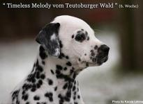 Timeless Melody vom Teutoburger Wald