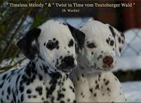 Timeless Melody vom Teutoburger Wald & Twist in Time vom Teutoburger Wald