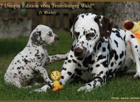 Unique Edition vom Teutoburger Wald und Christi ORMOND First Fairytale