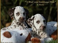 Unbreakable Soul vom Teutoburger Wald mit ihrem Bruder Until the End vom Teutoburger Wald