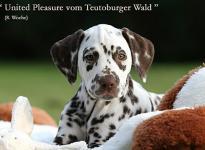 United Pleasure vom Teutoburger Wald