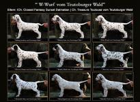 Standfotos des W-Wurfes vom Teutoburger Wald