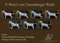 Y-Wurf vom Teutoburger Wald, geboren am 22.09.2014