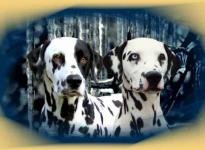 Django & Enduro vom Teutoburger Wald