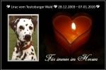 Lirac vom Teutoburger Wald - dankbar für 16 unvergessliche Jahre