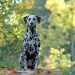 Amazing Amanda vom Teutoburger Wald (3 Jahre)