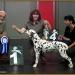 Triple X vom Teutoburger Wald (Rufname: Tristan) 19 Monate, präsentiert von Birgit Heise